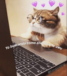 Cats, Animals, Instagram, Frases, Gatos, Animales, Animaux, Kitty, Cat