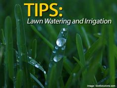Lawn watering, how long, rules for drought conditions, how much, best time, new lawns, irrigation equipment, water distribution, water efficient lawn #spr #sum