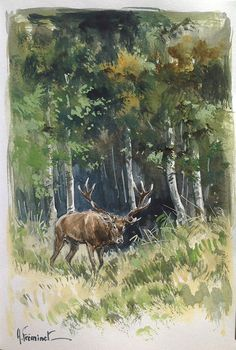 Le grand cerf à la gouache par Arnaud Fréminet. Red deer. #Wildlife painting.