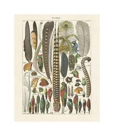"'Eryngium Alpinum ""Blue Star"" (Sea Holly)' Photographic Print - Steven Knights | Art.com Wall Art For Sale, Canvas Prints, Art Prints, Botanical Art, Bird Feathers, Framed Artwork, Framed Wall, Find Art, Giclee Print"
