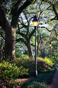 Savannah Spring Perspective Captures The Lovely Live Oak Trees Azaleas And Lamppost At Forsyth Park In Georgia