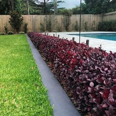 Perfectly hedged Alternanthera 'Little Ruby' Hedges Landscaping, Garden Hedges, Garden Edging, Landscaping Plants, Outdoor Landscaping, Front Yard Landscaping, Landscaping Ideas, Little Gardens, Back Gardens