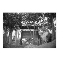 Chee March 2015 #cat #blackandwhitephotography