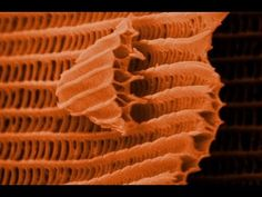 Butterfly wings under an electron microscope