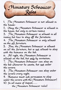 Awesome Mini Schnauzer Rules: haha...this was how Joe started out too!