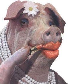 Putting lipstick on a pig quickmeme best memes about lipstick on a pig don t put lipstick on a pig go mobile hillary winking. Lipstick Pictures, Try Your Best, Flying Pig, This Little Piggy, Laugh Out Loud, Being Ugly, Cow, It Cast, Pearls