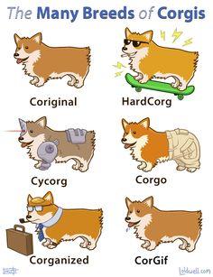 the breeds of corgi Cute Corgi, Corgi Dog, Cute Puppies, Corgi Meme, Corgi Breeds, Funny Animals, Cute Animals, Party Animals, Animal Fun