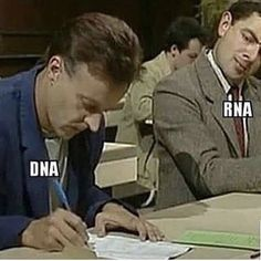 biology memes Looks like someone is copying you Biology Jokes, Physics Memes, Chemistry Jokes, Science Memes, Science Biology, Biology Teacher, Funny Science, Molecular Biology, Lab Humor