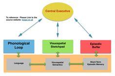 Baddeleys Working Memory Model diagram