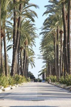 Boulevard in Palma Spain- What surprised most to a Polish friend was to see the palm trees in winter =) VERY GOOD WEATHER!
