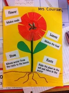 Parts of a Plant Project! Fun hands on   activity for kids to learn the function and parts of a plant!