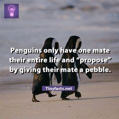 Is that adorable or what? Penguins are the best! I Smile, Make You Smile, Beautiful Creatures, Animals Beautiful, Funny Animals, Cute Animals, Fraggle Rock, All You Need Is Love, Pet Birds