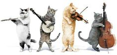 Groovy Cats