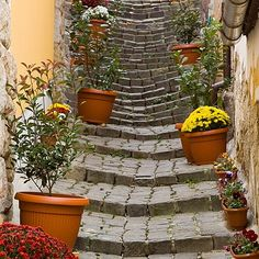 Szentendre Half Day Sightseeing Tour from Budapest Beautiful Stairs, Beautiful Places, Roads And Streets, Stairway To Heaven, Ways To Travel, Budapest Hungary, Countries Of The World, Stairways, Nature Photos