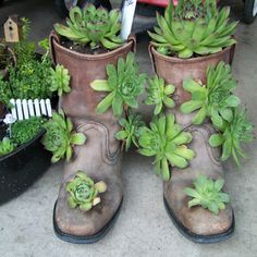 Work boot succulent garden