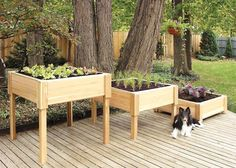 Square Cedar Raised Garden Planter - 3' x 3' -- I think I need these!!