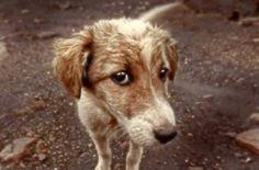 La truffa shock dei rom: gettano i cani contro le auto per il risarcimento  http://tuttacronaca.wordpress.com/2014/02/01/la-truffa-shock-dei-rom-gettano-i-cani-contro-le-auto-per-il-risarcimento/