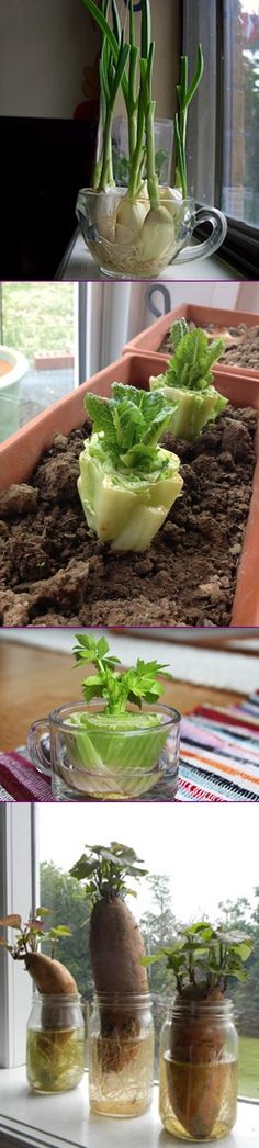 17 Foods To Buy Once And Regrow Forever (Regrow in Water), Great Tips to Recycle Kitchen Scraps into Endless Supply #Recycle, #Gardening => http://www.fabartdiy.com/foods-to-buy-once-and-regrow-forever/