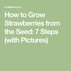 How to Grow Strawberries from the Seed: 7 Steps (with Pictures)