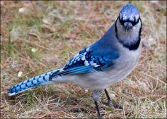 My Steph's favorite bird!