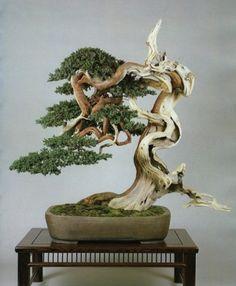 Bonsai Tree by catrulz