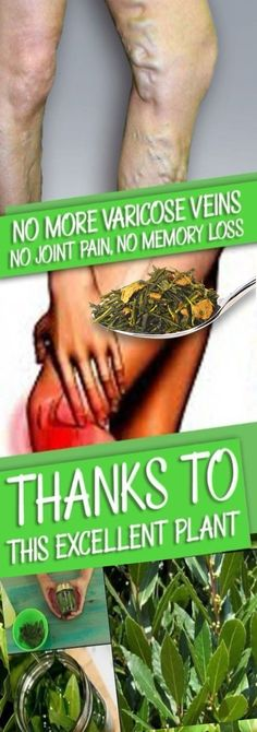 NO MORE VARICOSE VEINS, NO JOINT PAINS, NO LACK OF MEMORY, NO HEADACHES BY USING THIS LEAF! - Natural House Magazine