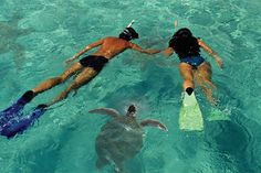 Lanai Island Dolphin and Snorkel Cruise from Maui Hotel Pick-Up Locations   Viator.com