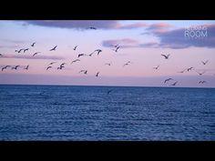 Вечерний Морской Прибой Звуки Волн и Чаек для Релаксации и Отдыха - YouTube Relaxing Room, Relaxation Room, Celestial, Sunset, Youtube, Outdoor, Animals, Animales, Animaux