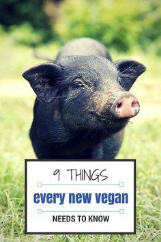 9 Things Every New Vegan Needs to Know - ChooseVeg.com