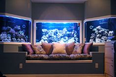 i like the use of lighting - a very atmospheric approach - i can see this working well with african cichlids as well as marine aquaria...
