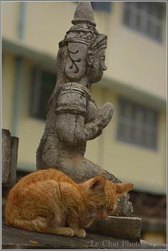 chat roux endormi devant devant une statuette