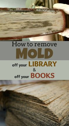 How to remove mold off your library and off your books - 101CleaningTips.net