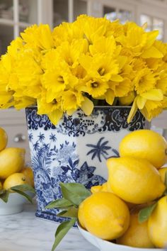 yellow flowers in blue white chinese vase. Spring Daffodil Centerpiece in a Chinese vase, bright and fresh with added bowls of lemons.