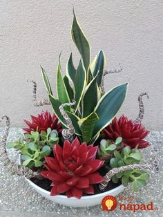Plantas e flores - Container Garten Sukkulenten - Succulents In Containers, Container Plants, Cacti And Succulents, Planting Succulents, Container Gardening, Planting Flowers, Container Flowers, Indoor Gardening, Cactus Plants
