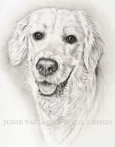 Golden Retriever Study, Commissions taken, Fine Art Prints & Greetings Cards available Dog Drawings, Pencil Design, Pet Portraits, Fine Art Prints, How To Draw Hands, Sketches, Study, Watercolor, Pets
