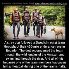 """unbelievable-facts: """" A stray dog followed a Swedish racing team throughout their 430-mile endurance race in Ecuador. The dog accompanied the team through the wild jungles of the Amazon unflinchingly; in fact, once, when the team was required to..."""