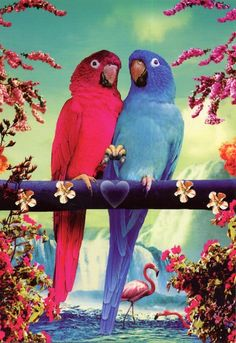 Parrots. pink blue nature kitsch tropical bird
