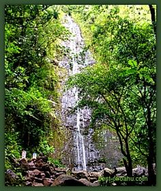 Manoa Falls Hike (30 min through forest & bamboo to reach a 150ft waterfall)