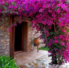 Wonderful Bougainvillea Trellis Ideas Bougainvillea Vines – Elegantly Twine Up a Trellis Wonderful Bougainvillea Trellis Ideas. Bougainvillea has been considered as one of the bright and colo… Bougainvillea Trellis, Beautiful Gardens, Beautiful Flowers, Beautiful Places, Landscape Design, Garden Design, Tropical Garden, Colorful Garden, Dream Garden