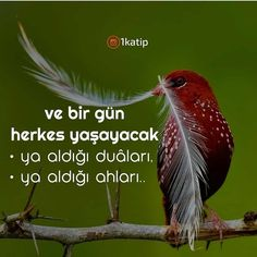 Beautiful Nature Wallpaper, Allah Islam, Story Video, Meaningful Words, Galaxy Wallpaper, Cool Words, Quotes, Animals, Ftm
