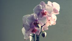 orchid. Photo by runner