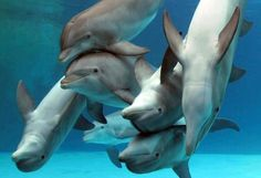 dolphins @ Sharon Epps