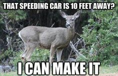 I've or my car to had multiple encounters with deer. I can honestly say that 70% of the tim