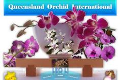 Promoting diverse interchange of sciences, arts, ideas and cultures pertaining to orchids via dynamic, interactive formats with an international horizon. Growing Orchids, Leo, Wordpress, Plants, Photography, Fotografie, Photograph, Photo Shoot, Planters