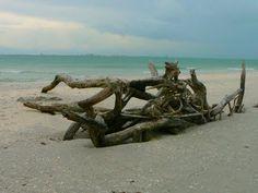 ::: FOCAL POINT :::: SET ADRIFT FOR SUMMER - Sanilbel Island FL