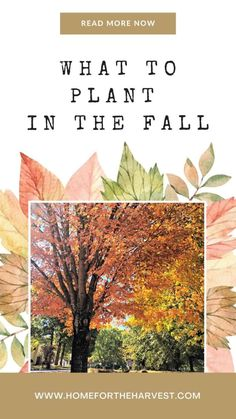 Fall is a fantastic time to plant many types of trees, shrubs, flowers, cool-weather vegetables, and ornamental landscape plants. Let's look at some of the best plants to add to your yard this autumn.
