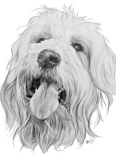 Goldendoodle by Barbara Keith Goldendoodle, Small Black Dog, Labradoodle Pictures, Cute Small Animals, Doodle Dog, Pictures To Draw, Drawing Pictures, Drawing Ideas, Animal Drawings