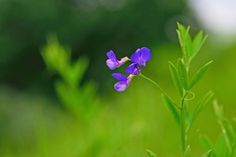 연리초 Beautiful Flowers, Garden, Plants, Garten, Lawn And Garden, Gardens, Plant, Gardening, Outdoor