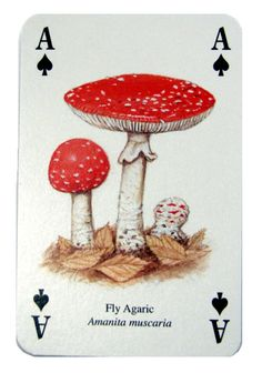 A♠ Fly Agaric (Amanita muscaria) Ace of Spades