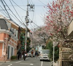 End of a commercial street into a residential street in Jiyugaoka suburb of Tokyo.  Notice the hybrid cherry blossom tree blooming to your right and in the background a white cherry blossom tree.